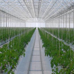 plastico para invernadero (5)