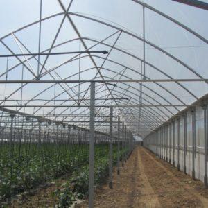 plasticos anchos para invernadero (3)
