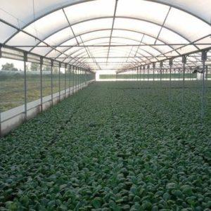 plasticos anchos para invernadero (4)